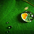 Droplet Of Love by Suradej Chuephanich