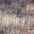 Dry Grasses And Bare Trees In Winter Forest by Elena Elisseeva