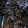Dusk In Bryant Park Print by Sherri Quick