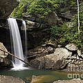 Eagle Falls - D002751 by Daniel Dempster