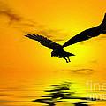 Eagle Sunset by John Edwards