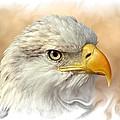 Eagle6 by Marty Koch