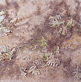 Early Fall Print by Michele Myers