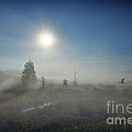 Early Morning Fog At Canaan Valley by Dan Friend