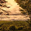 Early Spring Rain by Bob Orsillo