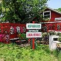 East End Farmstand by Ed Weidman