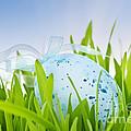 Easter Egg In Grass by Elena Elisseeva