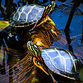 Eastern Painted Turtles by Bob Orsillo