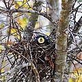 Eggstraordinary by Al Powell Photography USA