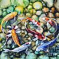 Eight Koi Fish Playing With Bubbles by Zaira Dzhaubaeva
