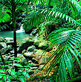 El Yunque Palm Trees And Waterfall by Thomas R Fletcher