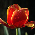 Elegance Of Spring by Karen Wiles