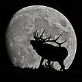 Elk Silhouette On Moon by Ernie Echols