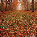 Endless Autumn by Photodream Art