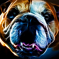 English Bulldog - Electric by Wingsdomain Art and Photography