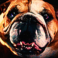English Bulldog - Painterly by Wingsdomain Art and Photography