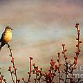Evening Mocking Bird by Darren Fisher