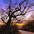 Evening Tree by Debra and Dave Vanderlaan