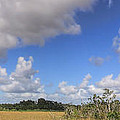 Everglades Landscape Panorama by Rudy Umans