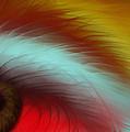 Eye Of The Beast by Anita Lewis
