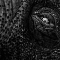 Eye Of The Elephant by Bob Orsillo