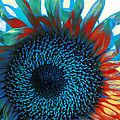 Eye Of The Sunflower by Music of the Heart
