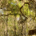 Fabulous Spanish Moss by Christine Till
