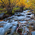 Fall At Big Pine Creek by Cat Connor