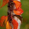 Fall Beauty by Sharon Elliott