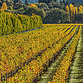 Fall Color Napa Styl...