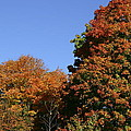 Fall Foliage In The Arboretum by Natural Focal Point Photography
