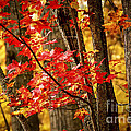 Fall Forest Detail by Elena Elisseeva