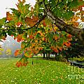 Fall Maple Tree In Foggy Park by Elena Elisseeva