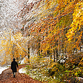 Fall Or Winter - Autumn Colors And Snow In The Forest by Matthias Hauser