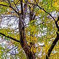 Fall Tree by Baywest Imaging