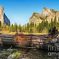 Fallen Tree In Yosemite by Jane Rix