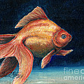 Fancy Goldfish by Linda L Martin