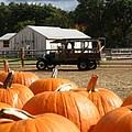 Farm Stand Pumpkins by Barbara McDevitt