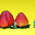 Farmers working around strawberries Print by Paul Ge