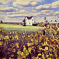 Farmhouse And Grapevines by Jill Battaglia