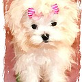 Faux Maltese Bella by Margaret Newcomb