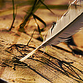 Feather And Sand by Raimond Klavins