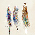 Feathers by Bri B