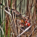 Feeding Time in the Marsh