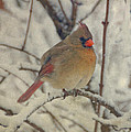 Female Cardinal In The Snow II by Sandy Keeton