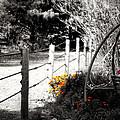 Fence Near The Garden by Julie Hamilton