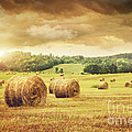 Field Of Freshly Bales Of Hay With Beautiful Sunset by Sandra Cunningham