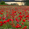 Field Of Poppies At The Lake by Guido Montanes Castillo