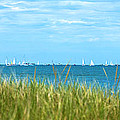 Figawi Sailboat Race by Diane Diederich