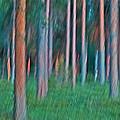 Finland Forest by Heiko Koehrer-Wagner